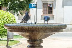 Fountain with doves