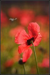 Four petals/Quattro petali