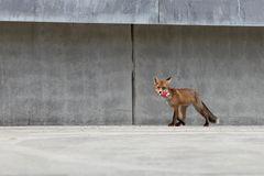 fox and cigarettes @ concrete jungle Leipzig 2012
