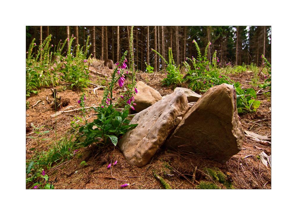 Foxgloves & Stones