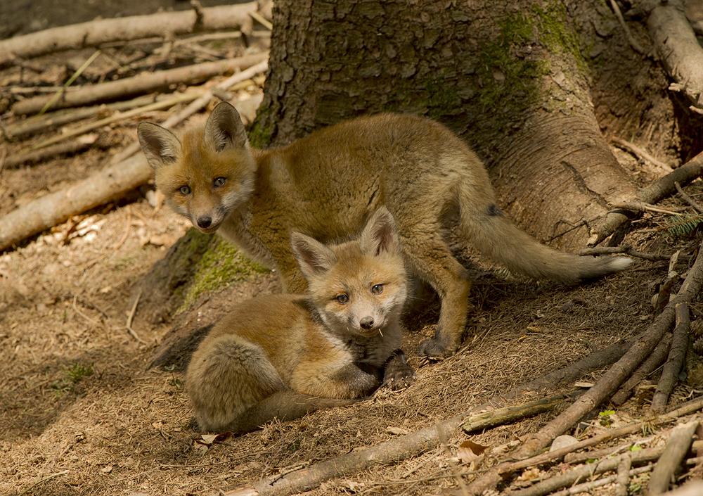 Foxi mit Schwester