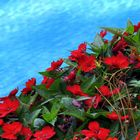 fra acqua e fiori