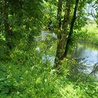 Fränkische Saale, Sommer 2021 (III)