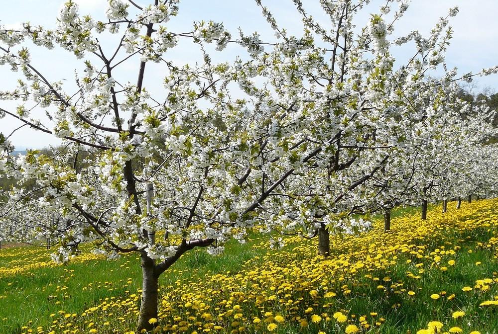 Fränkischer Frühling