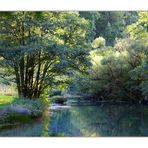fränkischer urwald