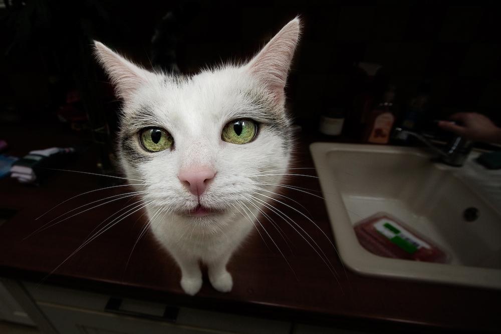 Fräulein Naseweiss macht schöne Augen