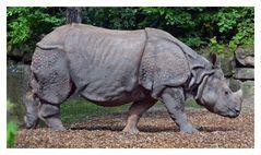 Fräulein Rhinozeros im Knitterlook