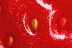 Fragaria ananassa