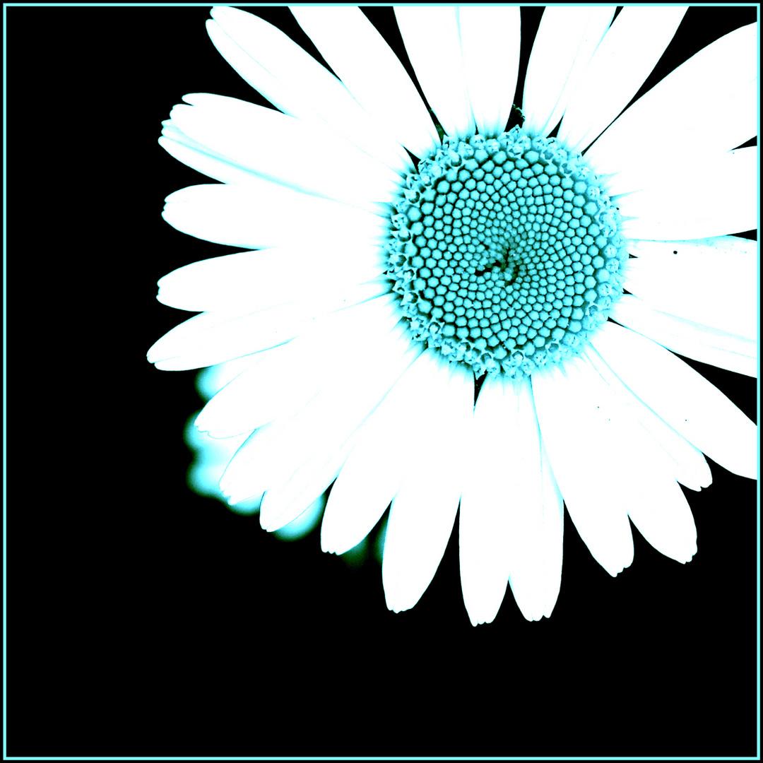 Fraktale in der Blume