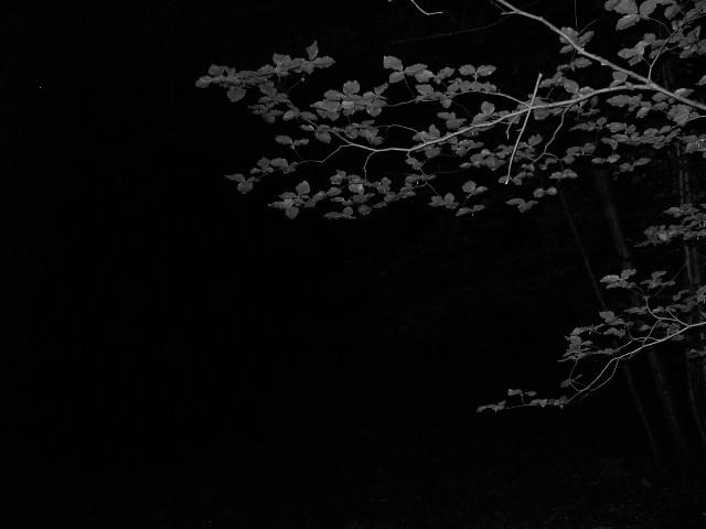 Franconian woods in Night / welke Nächten Zenario