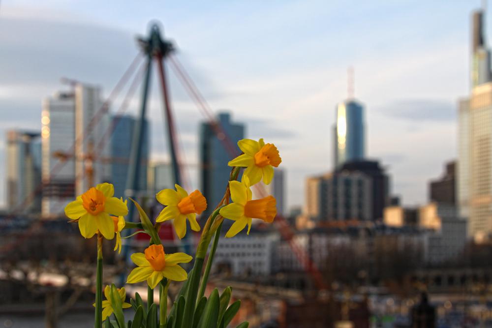 Frankfurt im Frühling