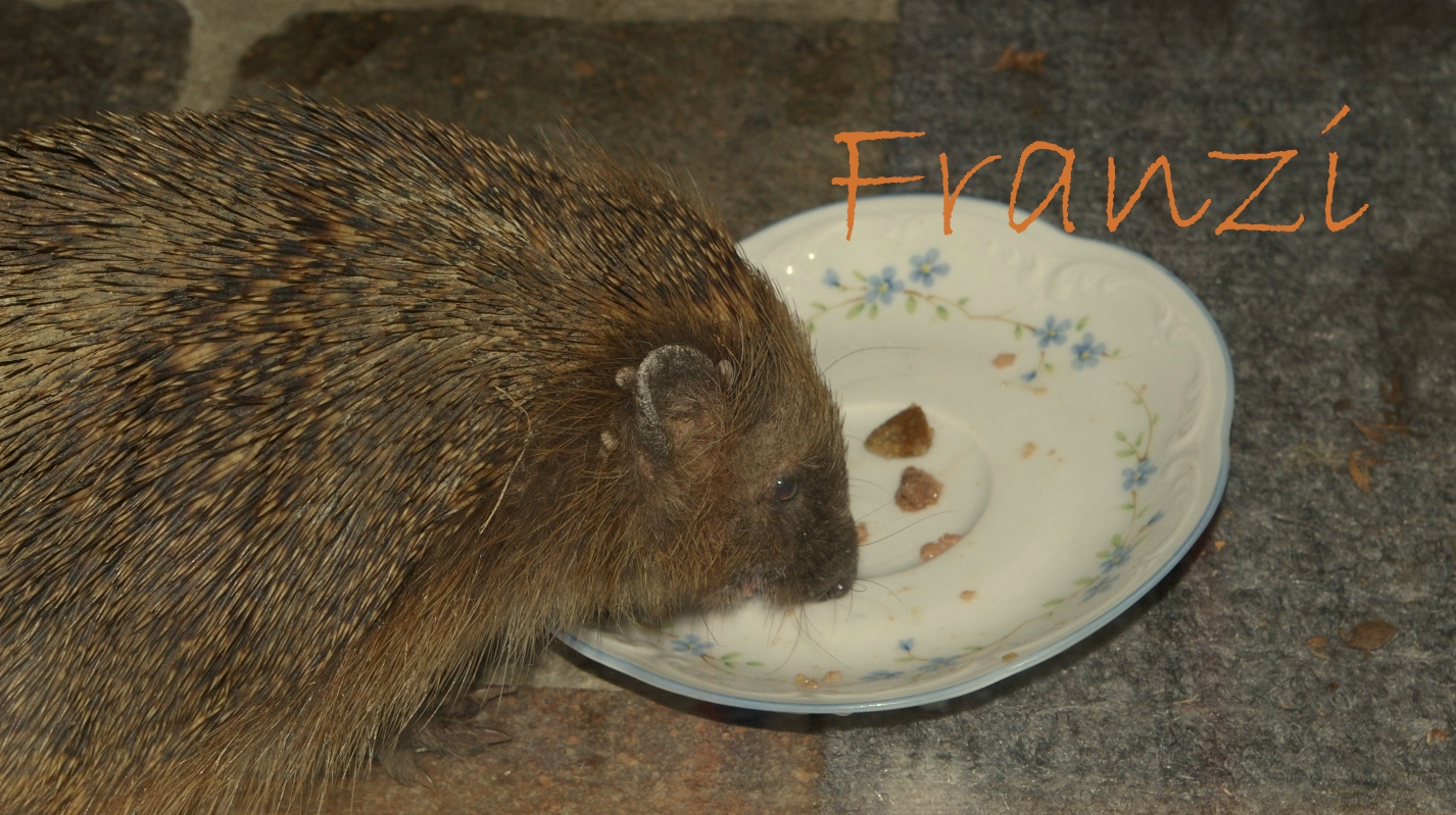 Franzi beim Abendessen