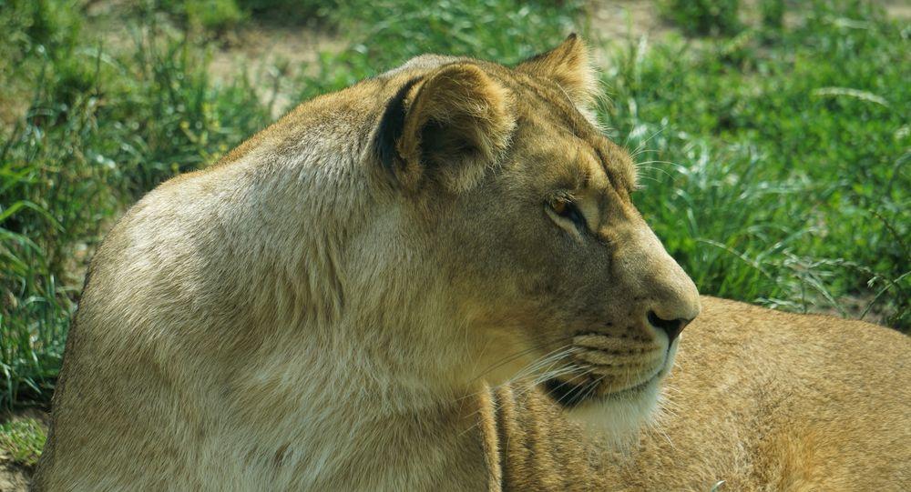 Wochenhoroskop Löwe Frau