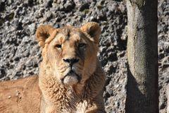 Frau Merkel besucht den Zürich Zoo