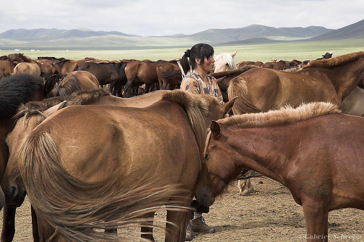 Frau zwischen Pferden; Mongolei