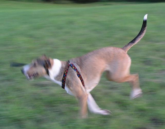 Frauchen hat zu stark an der Hundeleine gezogen ...
