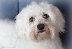 Frauchen meint, ich müsse zum Hundefriseur :(