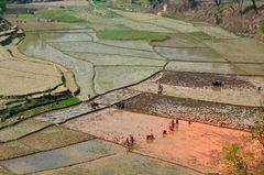 Frauen auf den Reisfeldern in Bungkot bei Gorkha