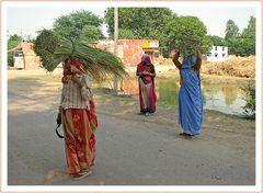 Frauen in Bharatpur