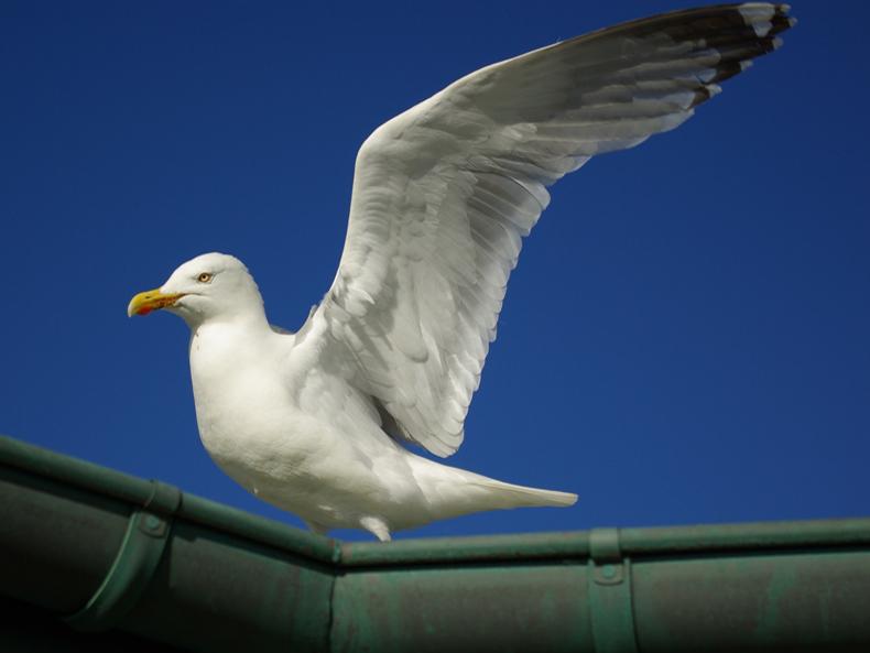 Frech und groß - Räuber der Nordsee