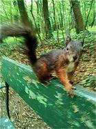 Freches Hörnchen - und gar nicht scheu