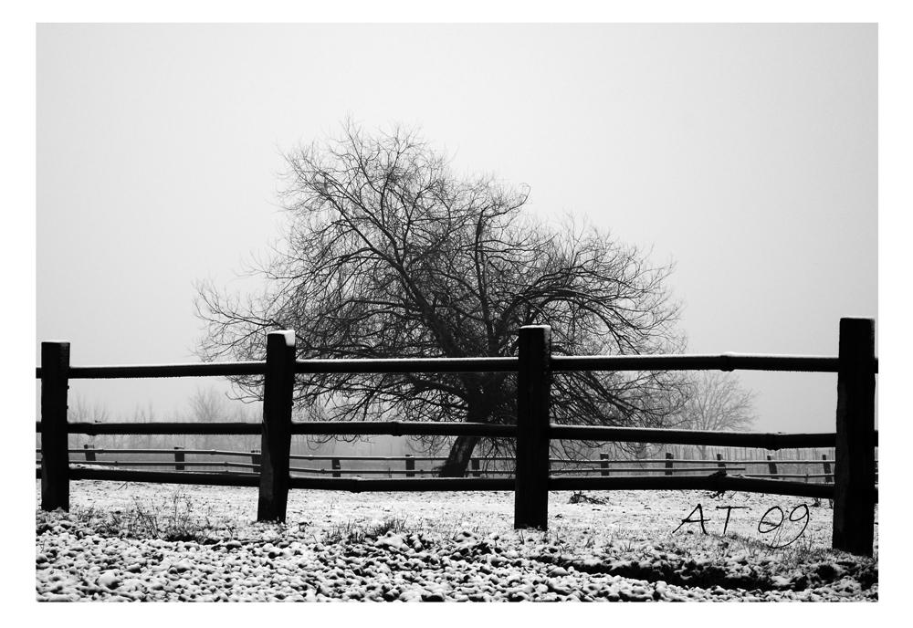 fredda solitudine