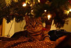Freddy unterm Weihnachtsbaum