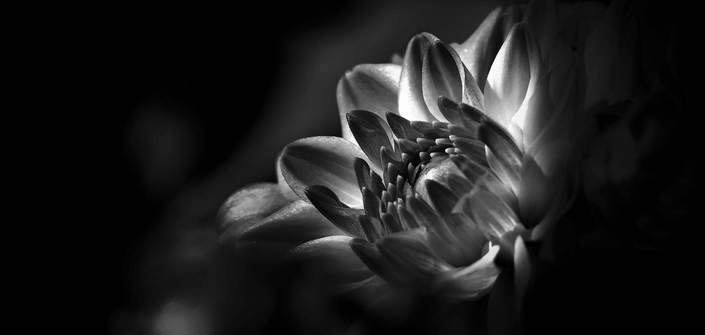 ... free form expression of dahlia