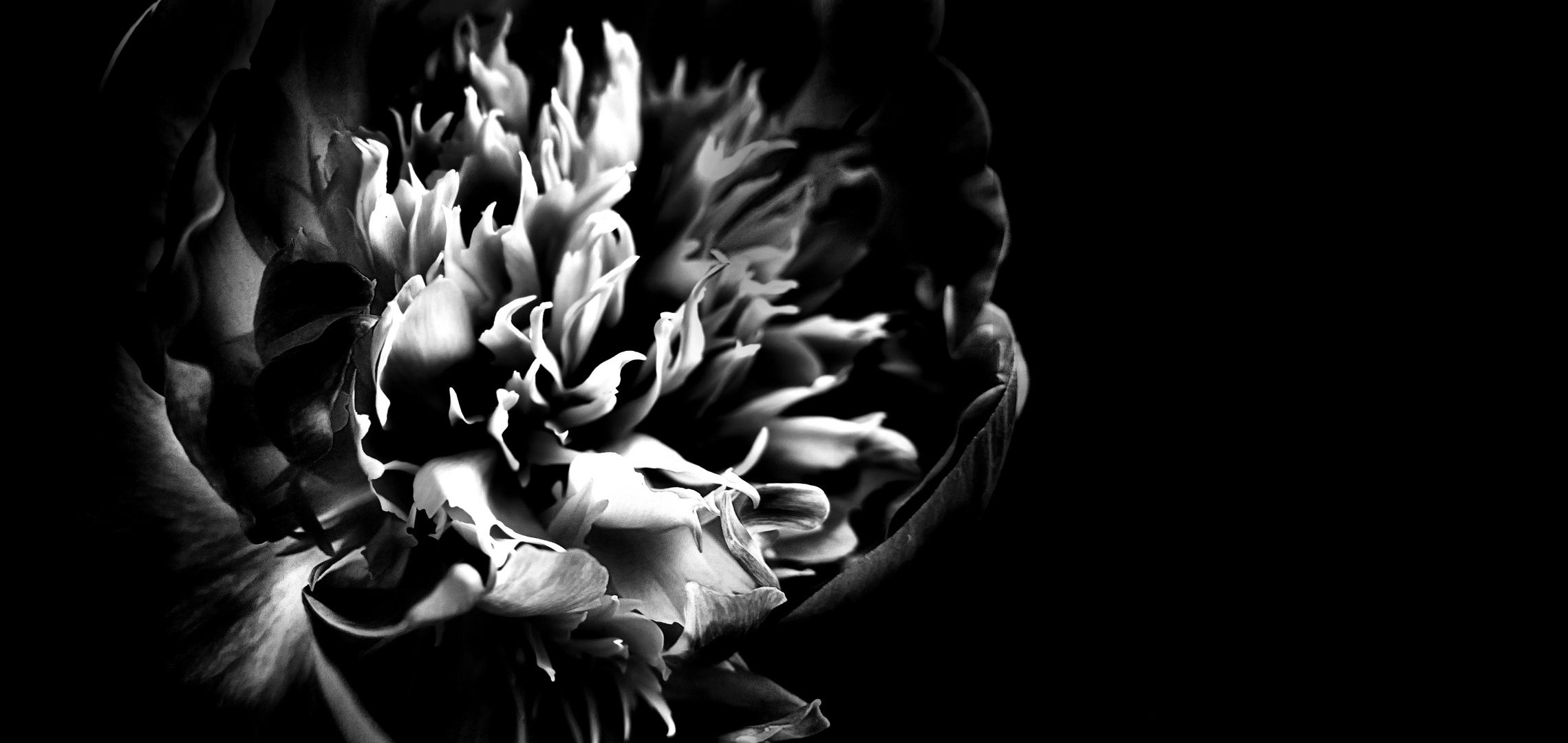... free form expression of peony