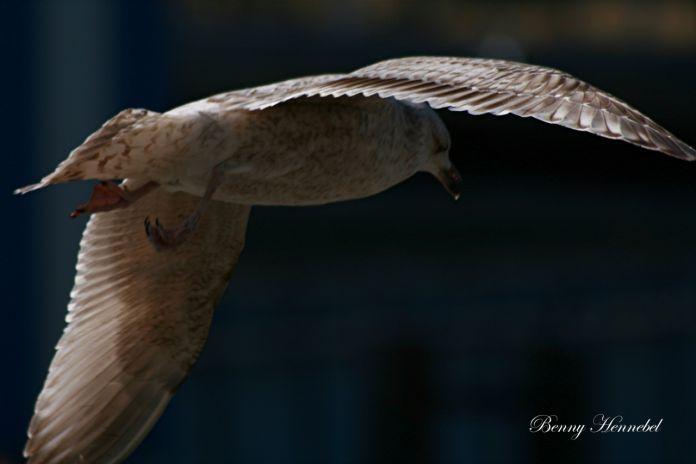 Free like a Bird...