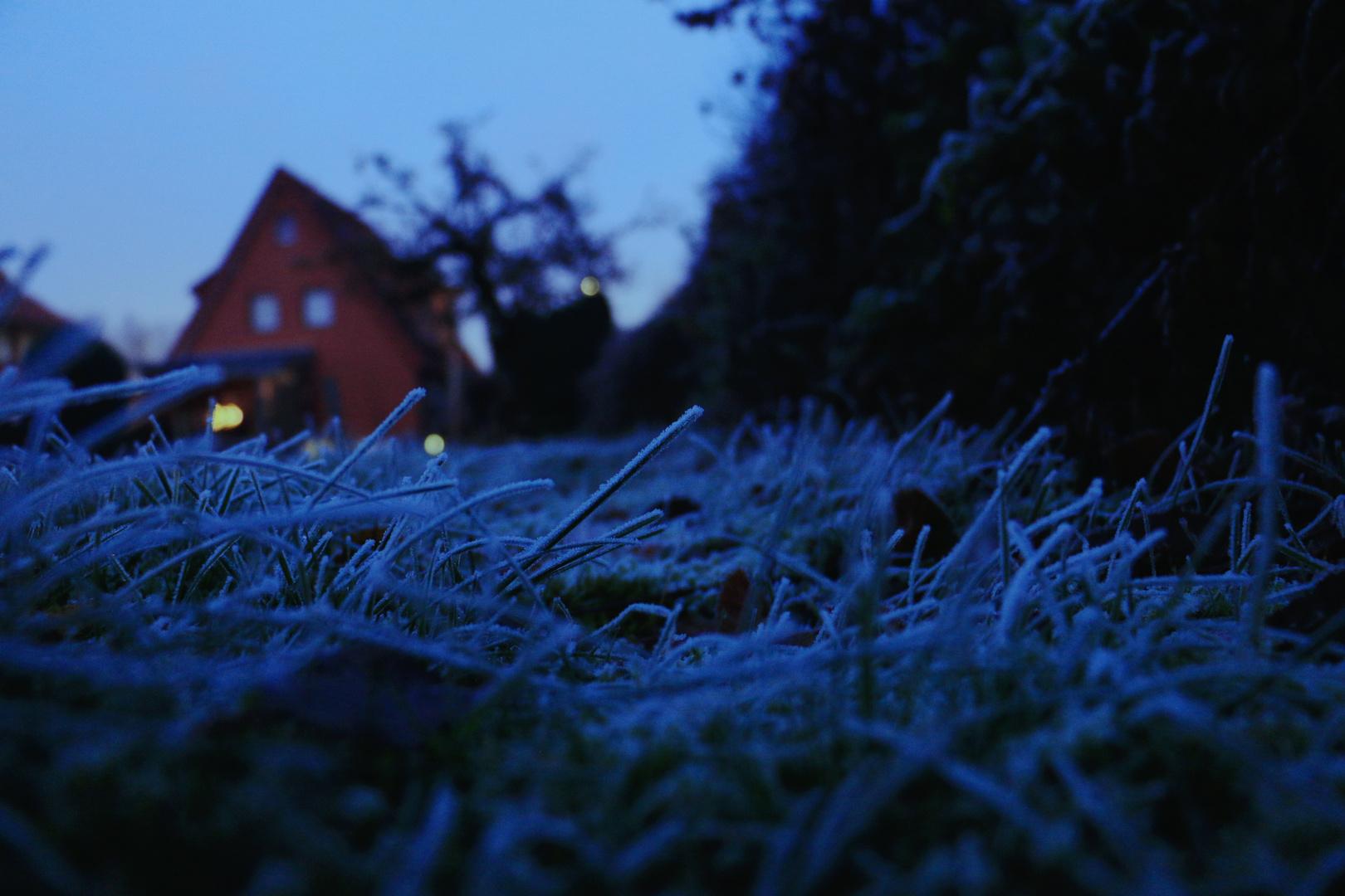 Freece garden