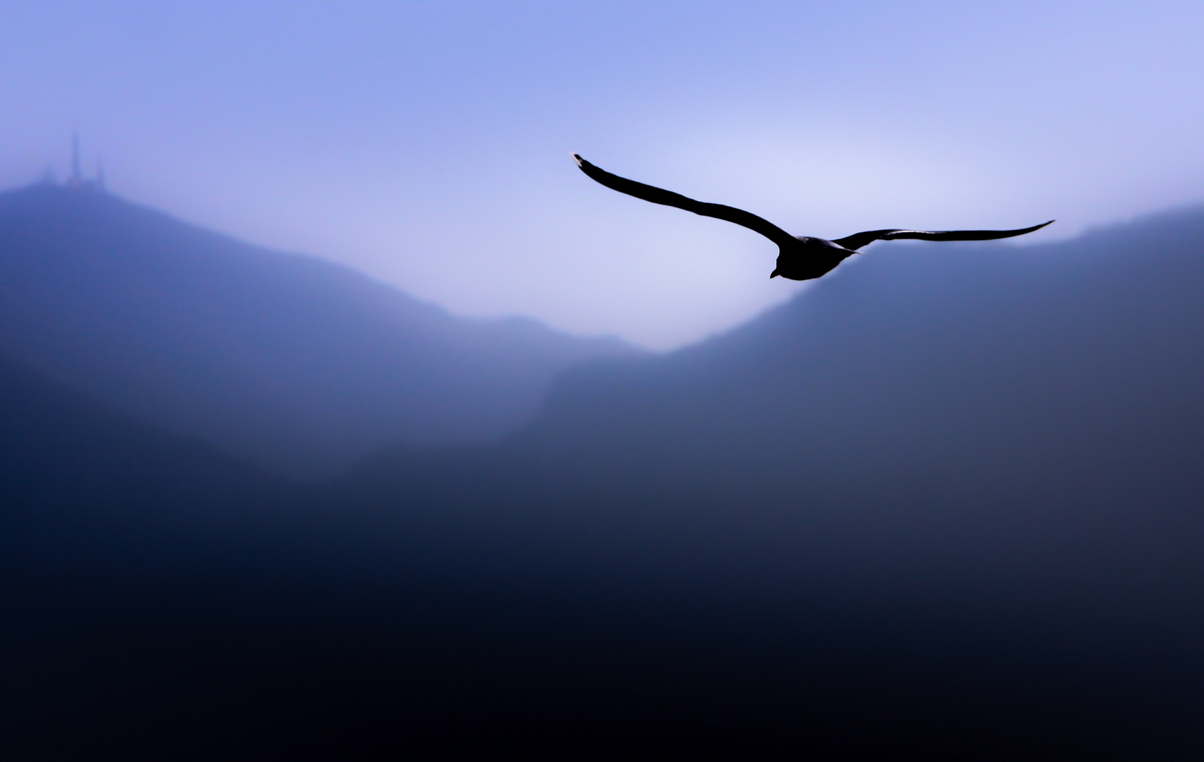 ....freedom....