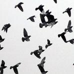 Frei sein...