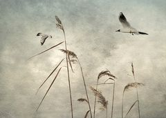 *frei wie die Vögel*