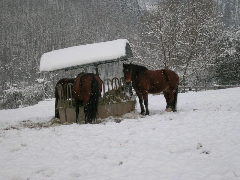 Freiberger im Schnee