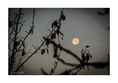 Freiburg 006 - Mond im Herbstlaub