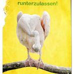 Freie Pelikane für Deutschland