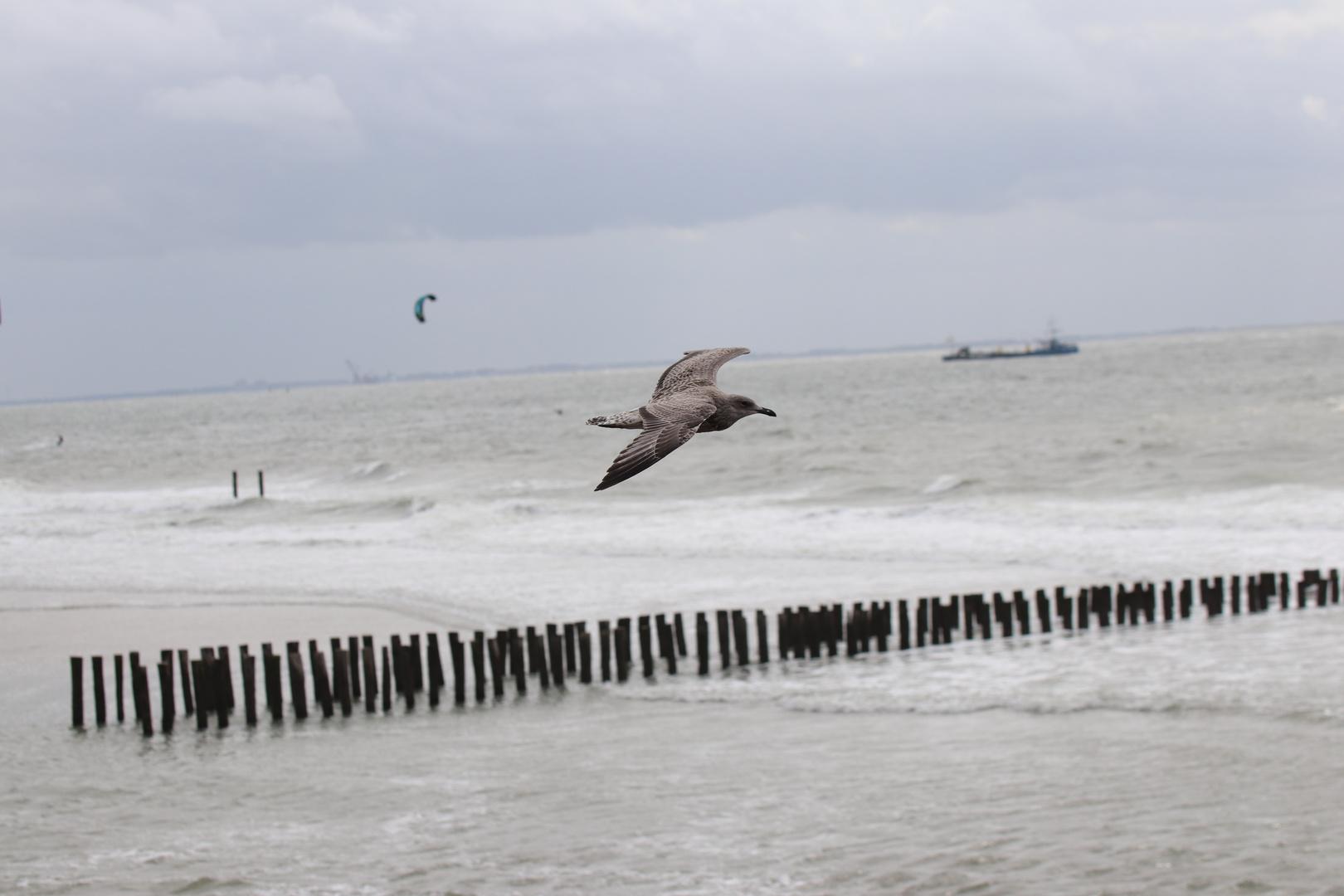 Freier Flug
