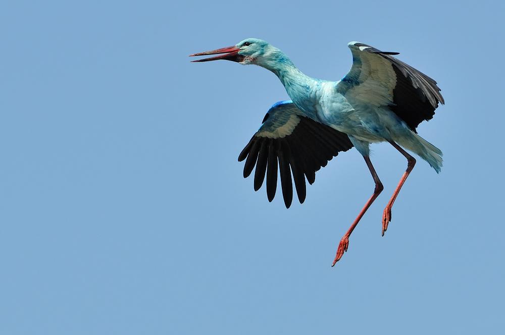 Freier Luftraum beim blauen Storch