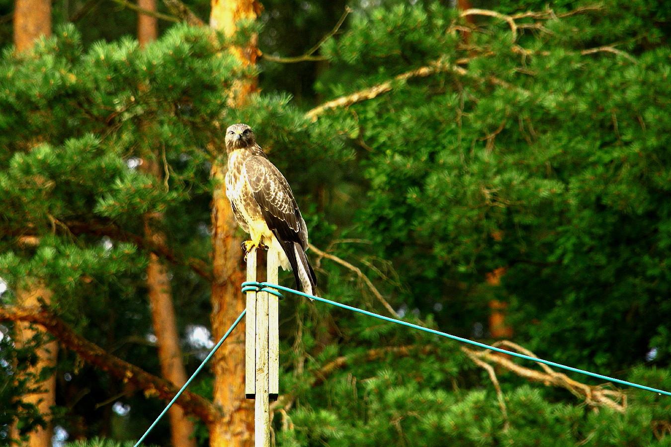 freier vogel