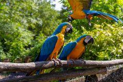 freifliegende Papageien