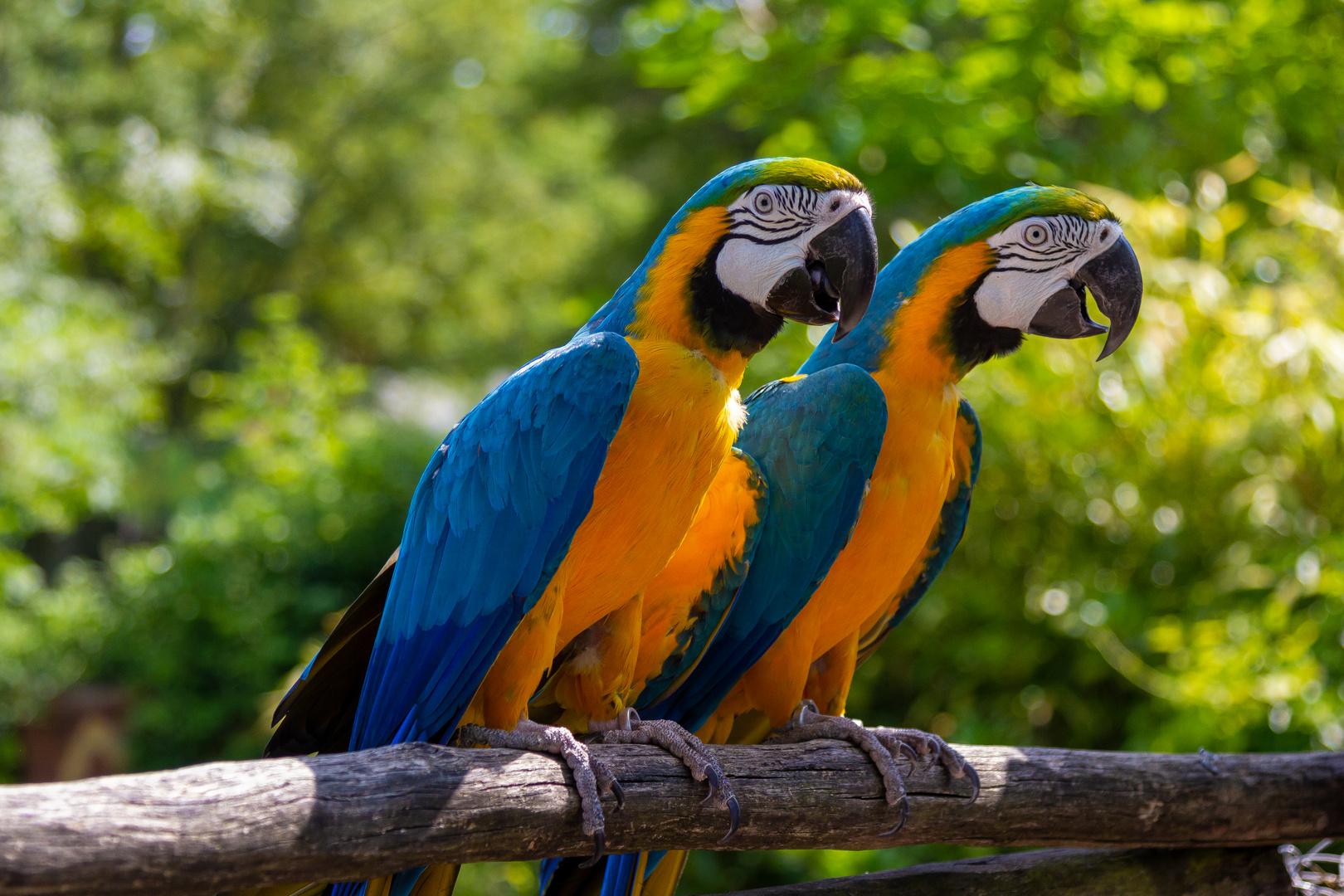 freifliegende papageien foto & bild | tiere, zoo, wildpark