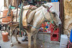 Freight donkey