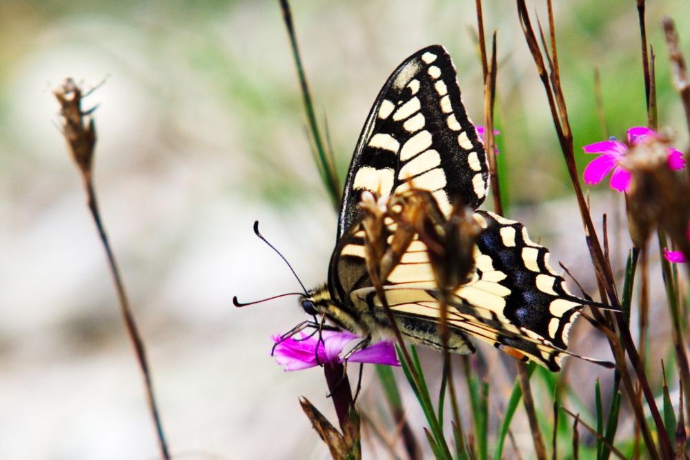 Freihand Schmetterling 2
