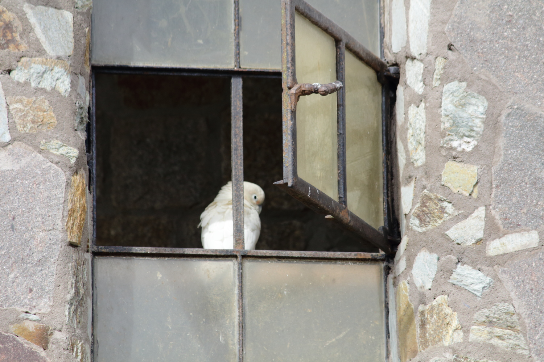 Freiheit ist das geöffnete Fenster zum nächsten Käfig.