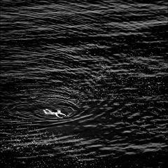 Freischwimmer ...