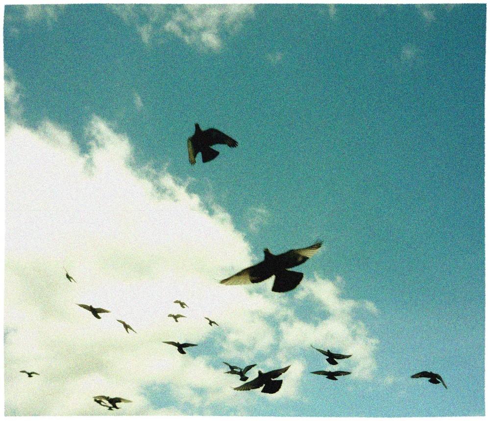 Frei...wie ein Vogel...im Wind...