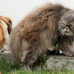 (Fremder) Hund und Katz