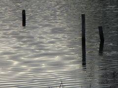 ..Frémissement de la Marne, cet après-midi..