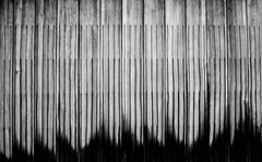 frequencies of wood